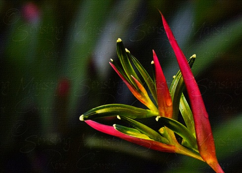 Tropical Flower, Fine Art Nature Photography, Custom Sizes Available