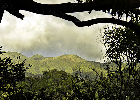 Aiea Trail, Fine Art Nature Photography, Custom Sizes Available