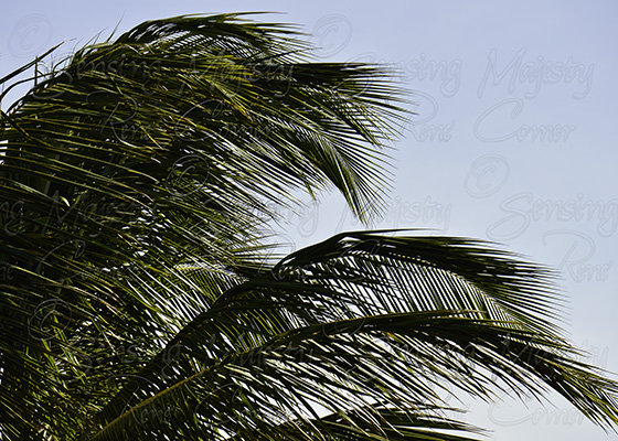 Palm Tree Leaves, Fine Art Nature Photography, Custom Sizes Available