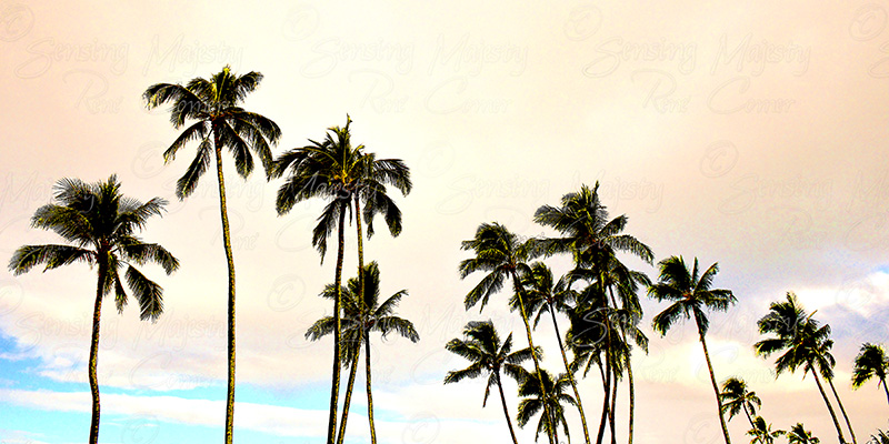 Palm Tree Wall Art, Panoramic Photo Art, Various Sizes Available